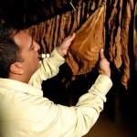 Особенности ферментации табака для сигар